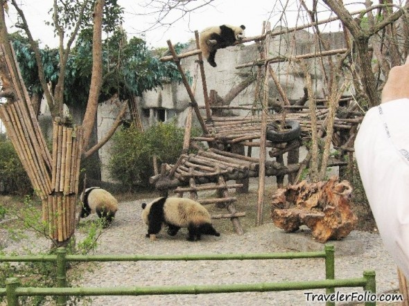 Sichuan Panda Sanctuary, China