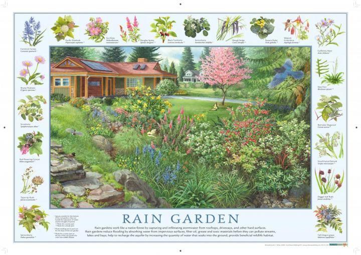 Create A Rain Garden Two Designs And Plant List Rain Garden Design Rain Garden Garden Planning