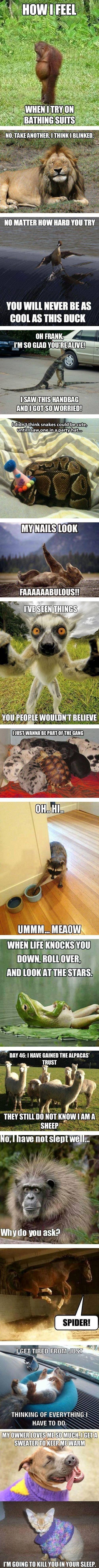 Funny Animal Memes ➣➢➣ http://www.diverint.com/memes-tumblr-ronda-de-chops-de-jonathan-viera