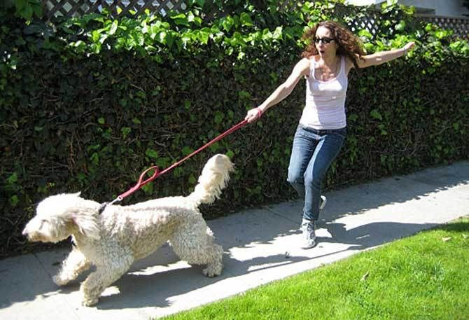 How To Stop Your Dog Pulling On The Leash - Dog Training - Dog Tips #dogs #pets #dog #cute #animals #puppy
