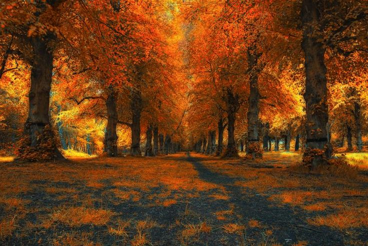 Lime Tree Avenue, Clumber Park Nottinghamshire, by Graham Melbourne - Pixdaus