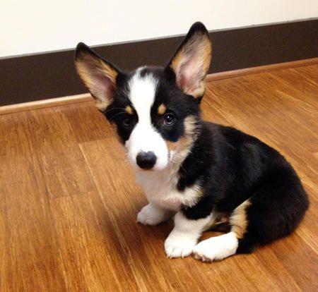 Benedict's ears are huge!