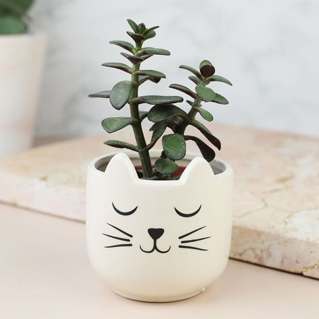 Set Of Two Cat S Whiskers Mini Planters These Small Indoor Pots