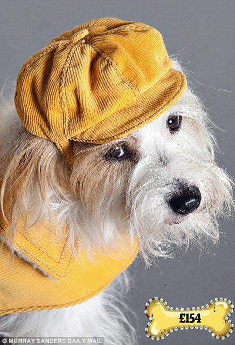 RABBIT THE JACK RUSSELL CROSS MODELS A SPENCER YELLOW COAT