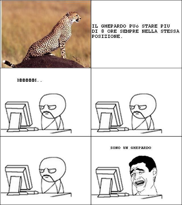 io sn un ghepardo !!