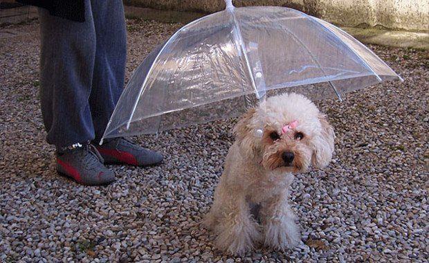 Amazing Inventions The Dogbrella | www.piclectica.com #piclectica