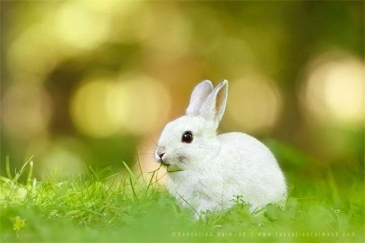 White Rabbit by thrumyeye on DeviantArt
