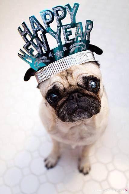 Toute l'équipe de Vetality vous présente ses meilleurs vœux pour cette année 2015 et le meilleur pour vos animaux de compagnie !
