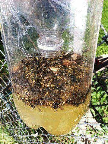 Wasp Catcher summertime