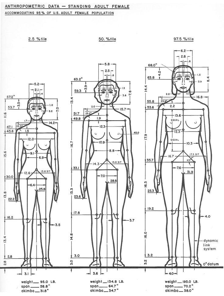 anthropometric data female