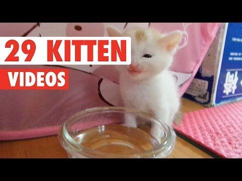 29 Cute Kitten Videos Compilation 2016 - http://funnypetvideos.net/29-cute-kitten-videos-compilation-2016/
