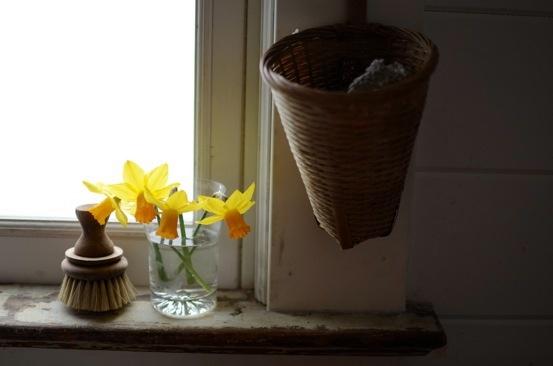 daffodils: Holding, Flora, Daffodils, Spring, Daffodowndilli