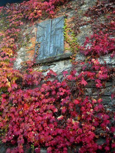 https://flic.kr/p/N1GEhM   Red ivy and rustic blue window   Giorno autunnale, Provincia di Bergamo (2012)