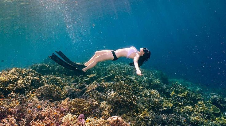 Enjoy the show!  You never ever return disappointed from a dive at Cape Kri, Raja Ampat  Location : Cape Kri Yenbuba, Raja Ampat Photo by : @melisasaraswati  www.tukangjalan.com    #PesonaIndonesia #explorenusantara #indonesiaonly #rajaampat #pakettriprajaampat #capekri #Misool #Tukang_Jalan #tukangjalantrip #tukangjalan #wisataindonesia #liburan #tour #travelling #indonesia #travelingram #dive #diving #travelphotograpy
