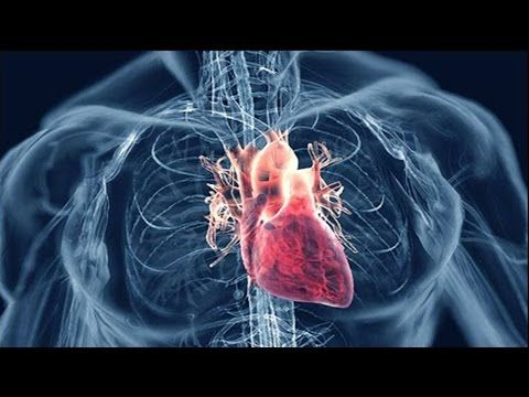 What Causes Heart Disease? - YouTube
