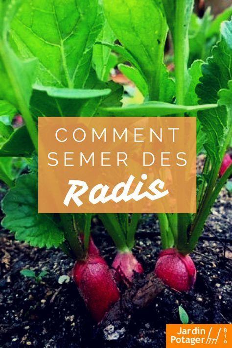 semer des radis conseils de culture planters radis semer des radis et planter des radis. Black Bedroom Furniture Sets. Home Design Ideas