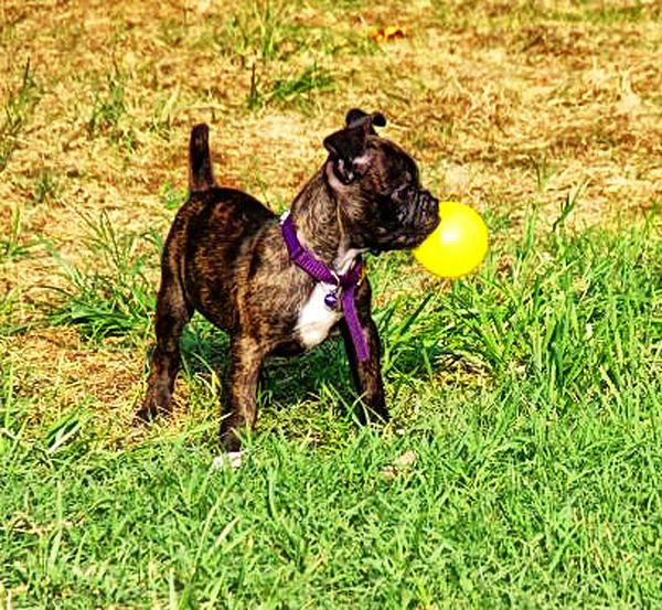 Bubble Bugg by Kelly Reber Who says dogs can't blow bubbles!