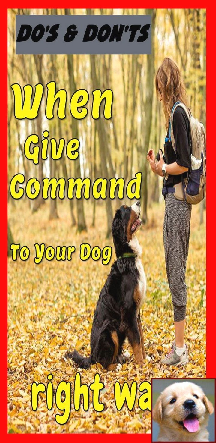 Dog S Behavior When You Are Pregnant And Clicker Training Dogs