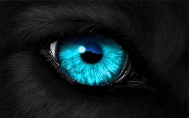 Black Wolf with Blue Eyes | sketching ideas part two ...