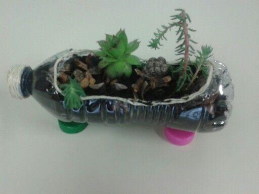 Piantine su bottiglia riciclata