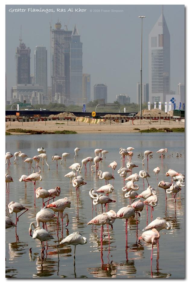 Flamingo sanctuary Sheikh Zayed Road 1095 best
