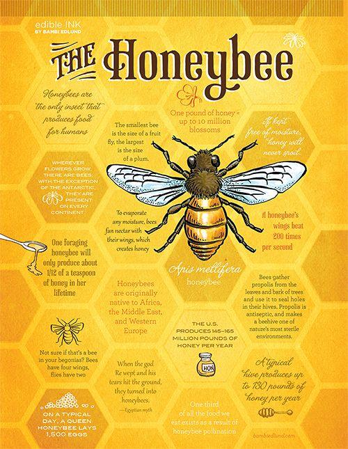 The Honeybee | Edible Austin Fresh 2017