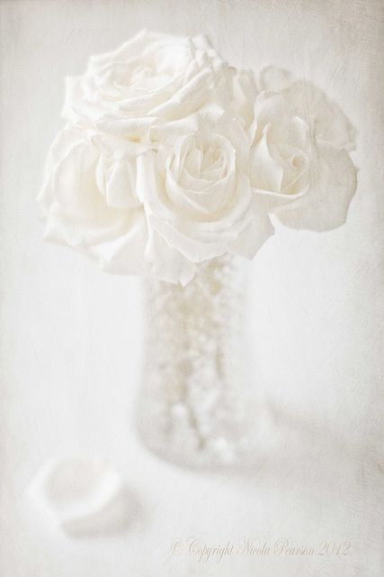 Pure white roses...