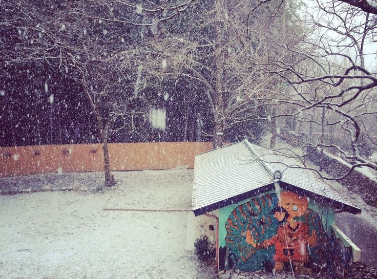 The Damyang House: snowing!