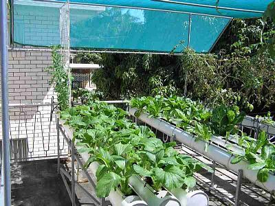 Homemade Hydroponic Systems: Save Green, Hydroponics Growing, Growing System, Greener Living, Hydroponics Gardens, Work System, Homemade Hydroponics, System Homemade, Hydroponics System