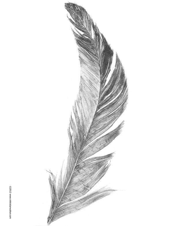Feather Sketch by nikkistarwalker.deviantart.com on @deviantART