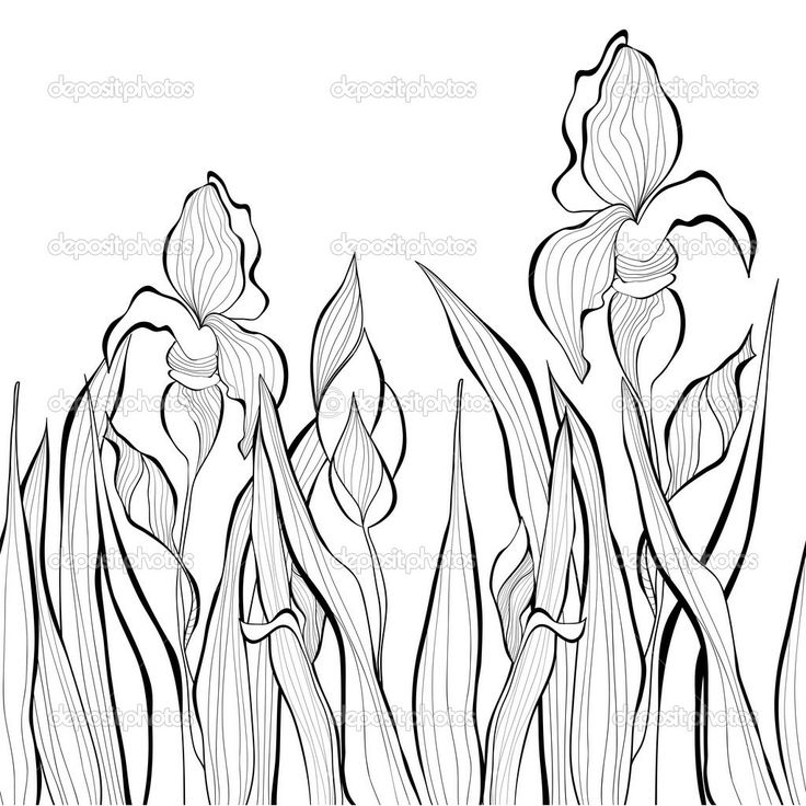 Line Drawing Of Iris Flower : Best line drawings of irises images on pinterest