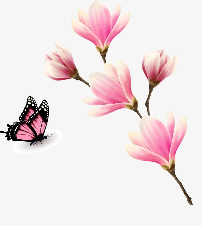 Butterfly Clipart Pink Butterfly Squid Decorative Pattern Leave The Png Plant Beautiful Decorative Pattern Leave Png Pin Butterfly Clip Art Pink Butterfly Pink