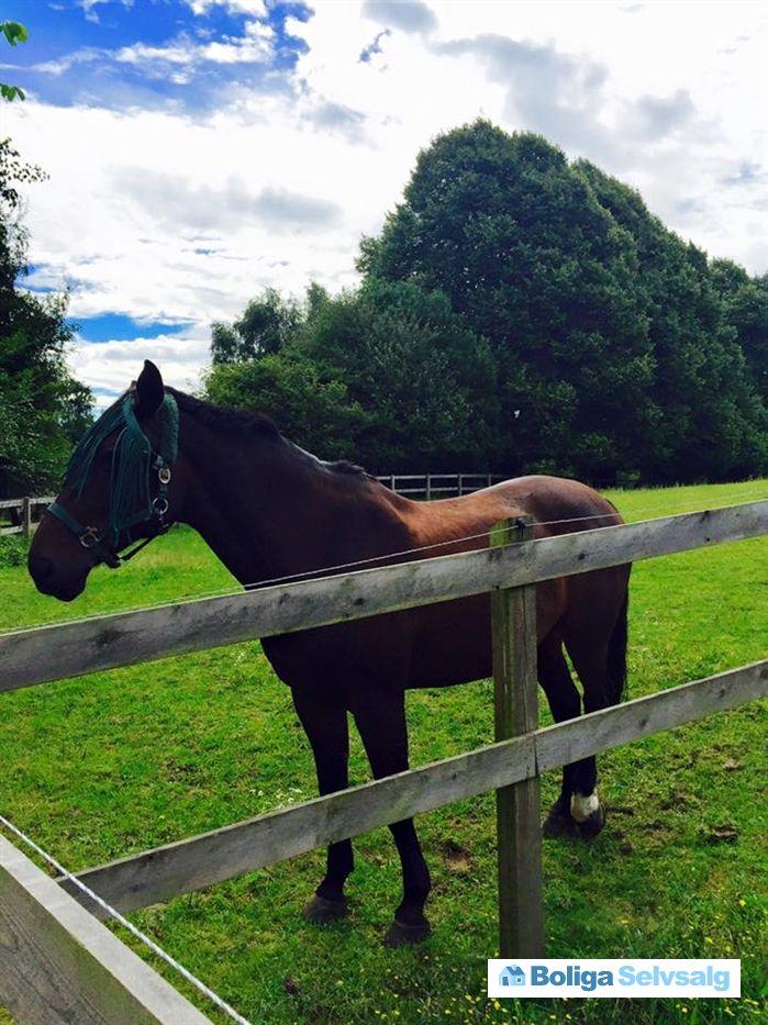 Gammel Holtevej 128, 2970 Hørsholm - Charmerende naturgrund med hestefolde som nabo #grund #helårsgrund #grundsalg #hørsholm #selvsalg #boligsalg #boligdk