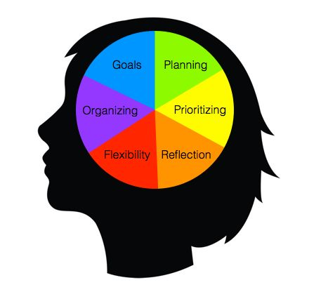 executive function skills in a nutshell  (help! i'm in a nutshell)