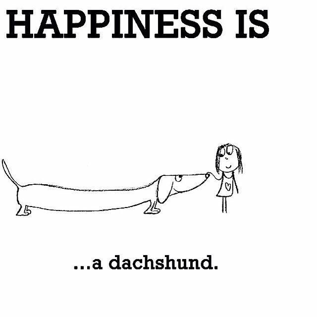 yes! #dachshund #doxie