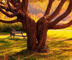twin trees wallpaper