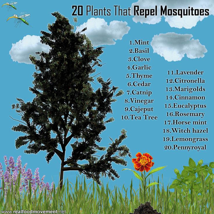 20 Plants that Repel Mosquitoes.  Marigolds...Check.  Need to start planting around the pool for summer.