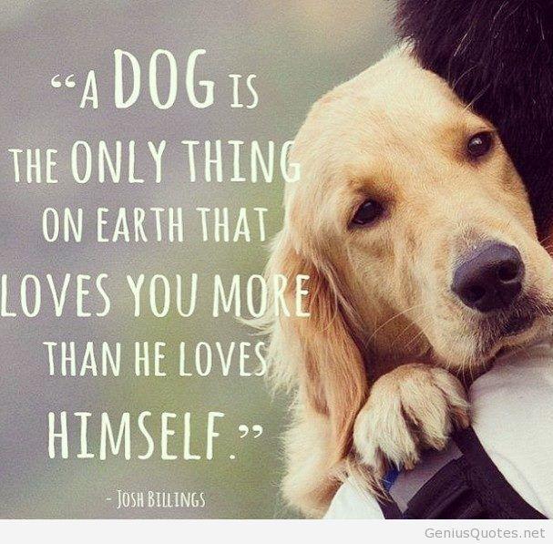 Dog Best Friend Quotes (3)