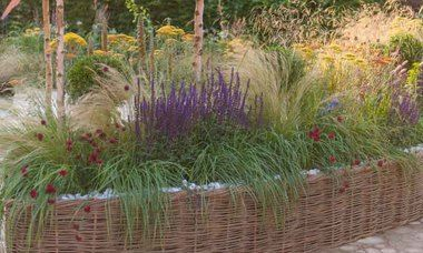 Climate Zone 6 planting: Garden Ideas, Border ideas, Perennial Planting, Perennial combination, Summer border, Fall Border, Grass Border, Salvia Nemorosa, Stipa, Stipa Tenuissima, salvia Mainacht, Salvie Caradonna, Salvia Amethyst