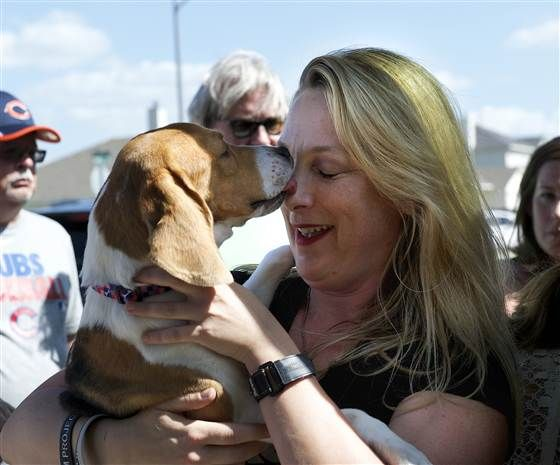 I'd very much love to see all animals are free of cruelty in my lifetime: 7 beagles leave lab, adjust to a new life Beagle Freedom Project