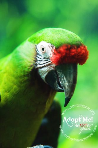 33 Best Adopt A Rescued Bird Month January Images On