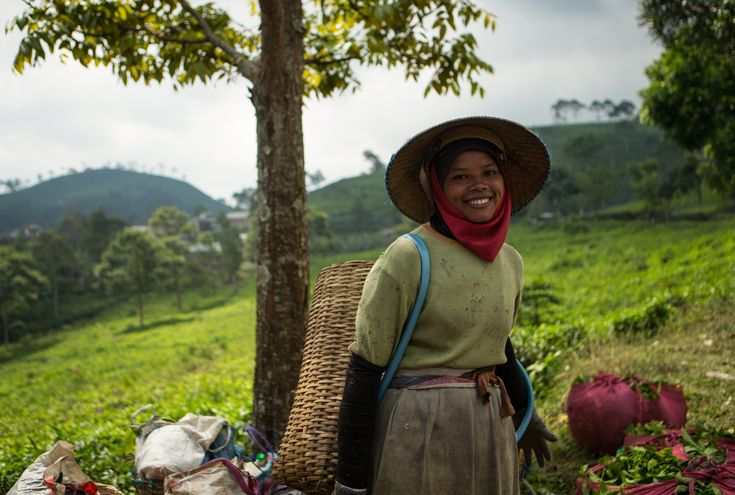 "Alila Journeys ""Tawangmangu tea plantation"" - Alila Solo - Central Java"