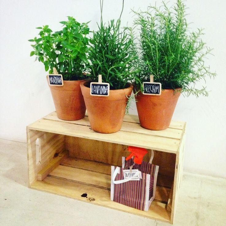 . Kit Horta no Caixote - três vasos, caixote e kit de cultivo