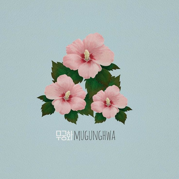 #무궁화 #mugunghwa #hibiscus #illustration #illustrator #photoshop #일러스트 #포토샵…