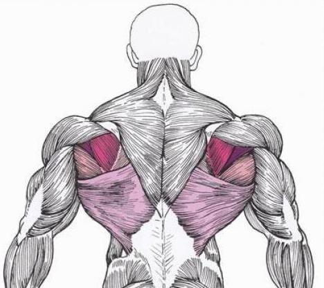 Как накачать широчайшие мышцы спины, как сделать широкую спину и развить крылья - SportObzor.ru