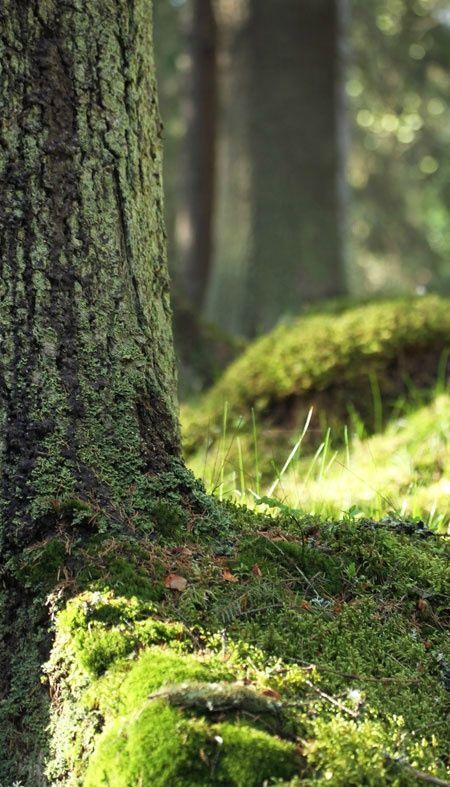 En forêt                                                                                                                                                                                 Plus