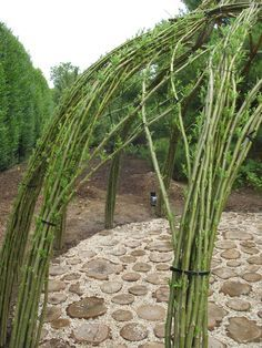 Living willow structure.
