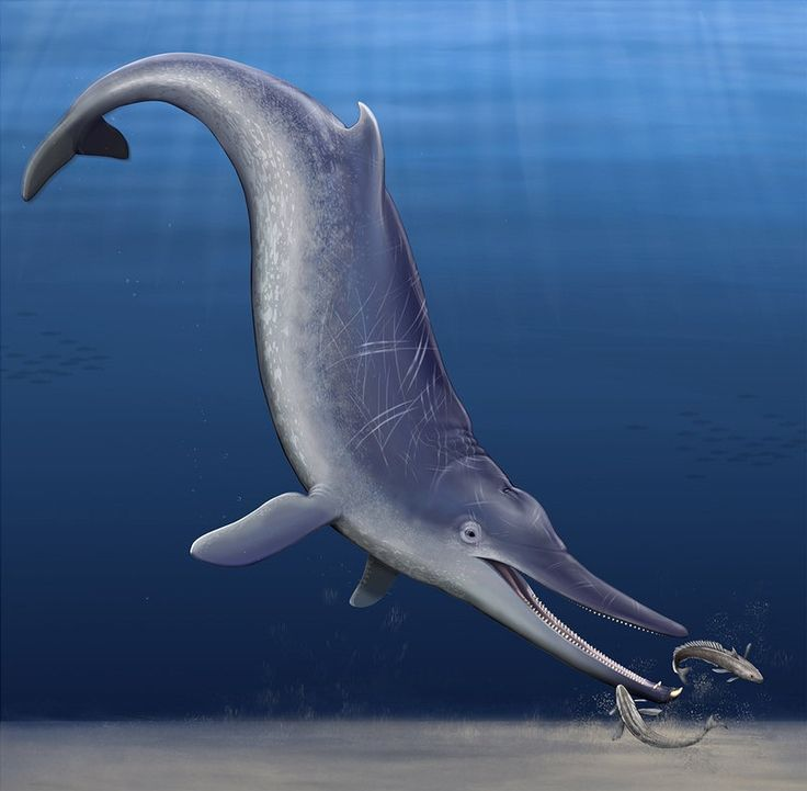 an analysis of the dolphin species the mammals of the sea In seven marine mammal species from from sea ice algae our analysis also marine mammals, the second book of dolphins and the.
