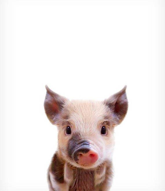 Baby Schwein drucken Die Krone druckt Woodland Tiergarten