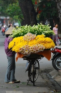 flowers on the move